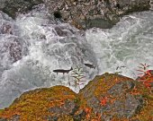 Salmon Cascades - Sol duc river Washington