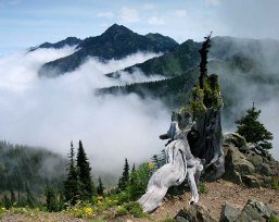 Hurricane Ridge above Port Angeles Washington.