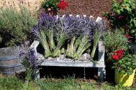 Jardin du Soliel Lavender Farm 10